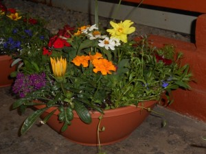 flowercottagecortez_patio_pan_planters